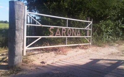 OnImpact Features Sarona and EMIIF